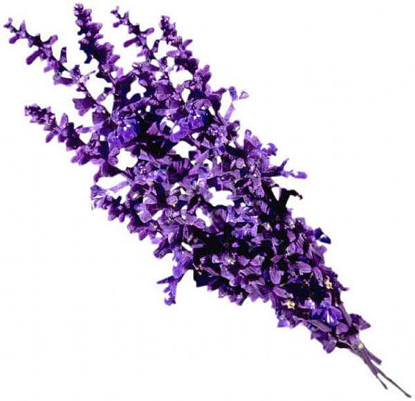 Lavender-main_Full
